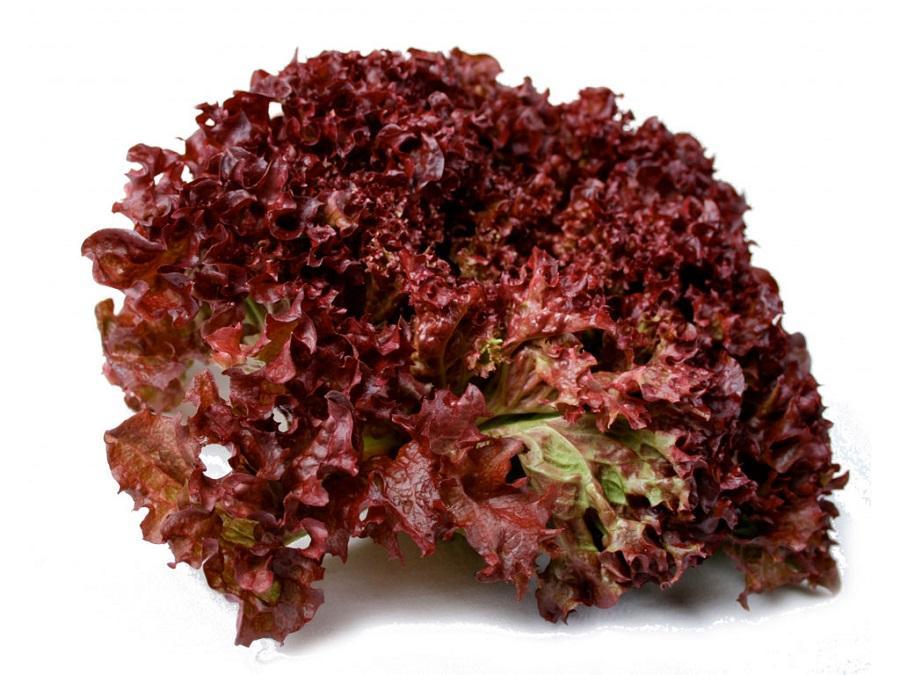 Lettuce Lollo Rossa Seeds (100 Pcs) By Lego Enterprise.
