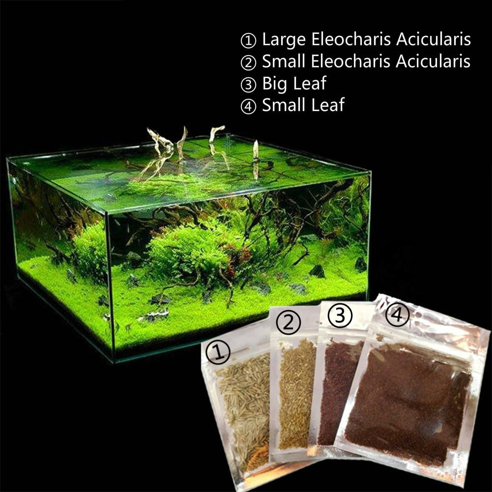 Aquarium Carpet Plants India Carpet Vidalondon