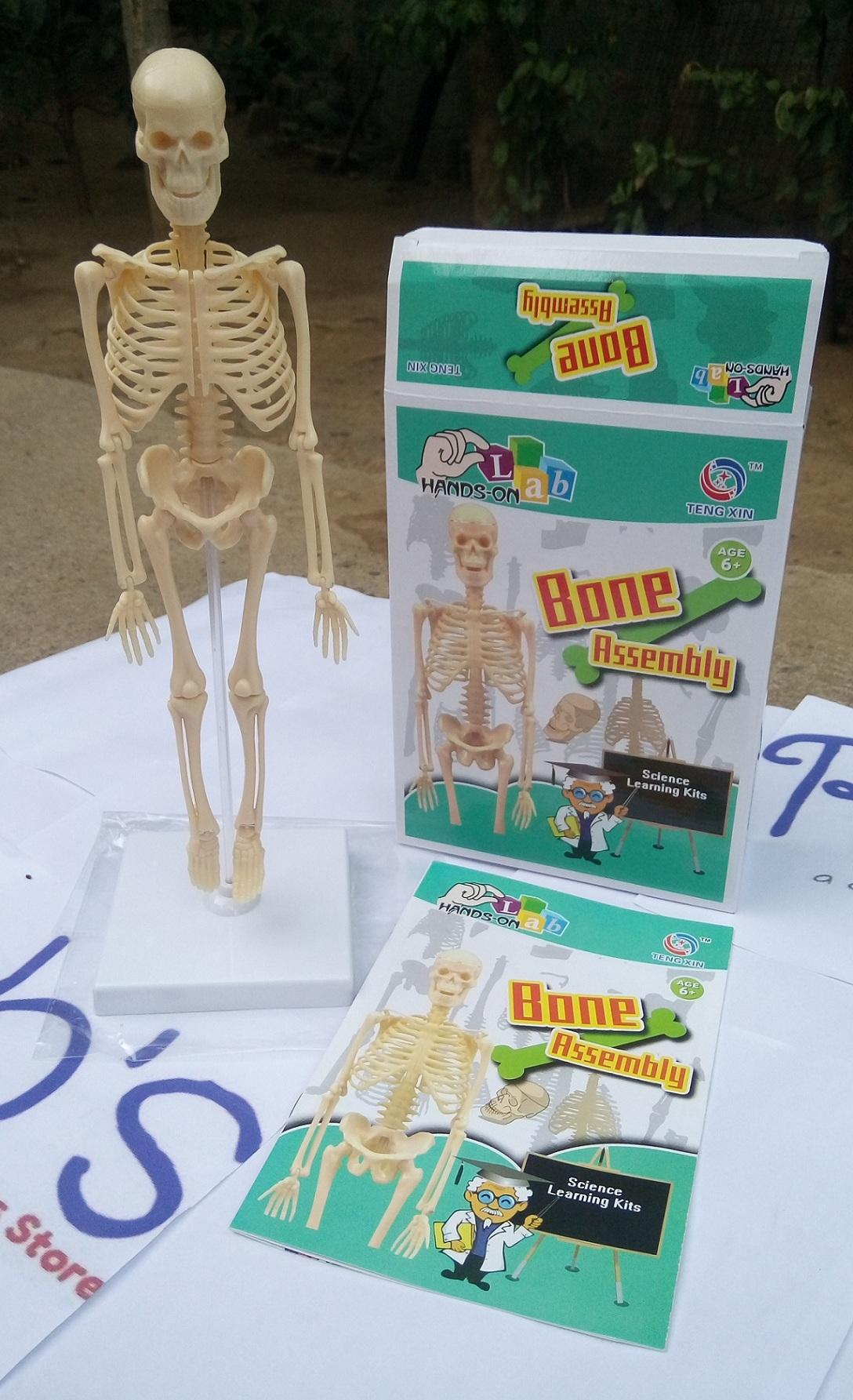 Science toys for sale stem toys online brands prices reviews in human bone assembly kit educational toy learn about science bone structure solutioingenieria Gallery
