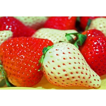 40pcs Cream Strawberry Fruit Seeds Home Garden Plant - intl - 2