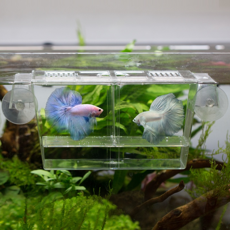 Philippines | Aquarium multi-function box double breeding