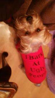 Dog Summer T Shirt Sweatshirt for Pets Puppies size:M - intl - 3