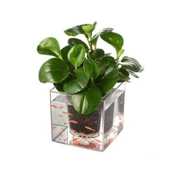 Self Watering Plant Pot Fish Tank Clear Tube Flower Pots - Intl Price Philippines