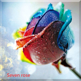 Harga 5D Cross Stitch Diamond Painting Diamond embroidery-seven rose