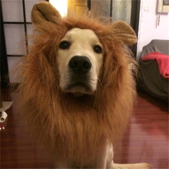 Lion Mane Headwear Wig for Dogs Dogloveit Dog Costume with GiftType D Light Brown With Ear - intl