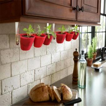 Vertigrow Natural Chives Growing Kit Urban Farming Vegetable Vertical Gardening Indoor and Outdoor - 3