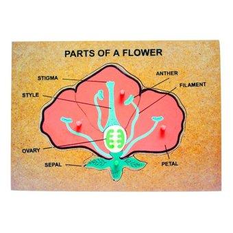 Tahanang Walang Hagdanan Parts of a Flower (Red/Green)