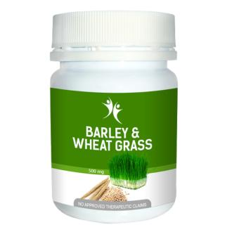 Harga Barley & Wheat grass by Purplelife
