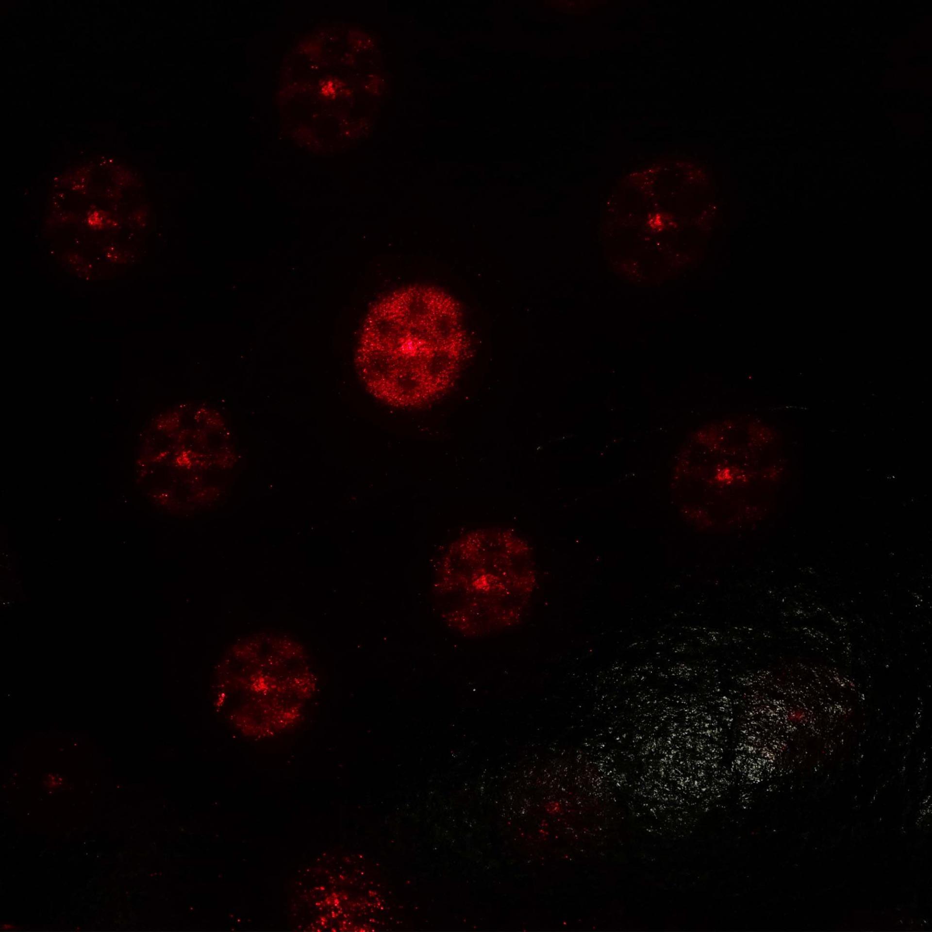 Car Laser Fog Lamp Laser Warning Lights SRF-2269 (9830-092) ...