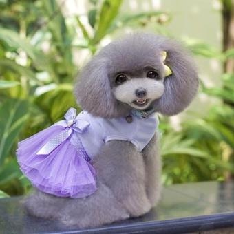 Cute Heart Pattern Pet Bubble Skirt, Size: S, Back Length: 20cm,Chest: 32cm(Purple) - intl - 5